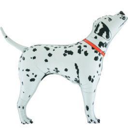173GR37 Dalmatiner mit rotem Halsband